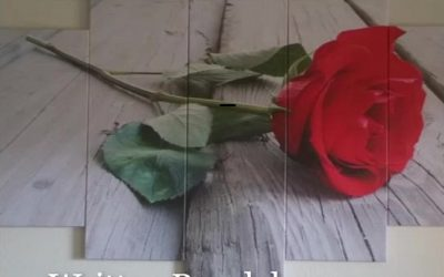 A Rose for All Seasons by PB Benson